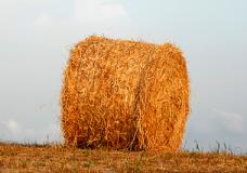 Speciale Il grano incontra la pietra