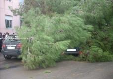 Vittoria: Tragedia sfiorata, albero schiaccia auto vicino a una Scuola