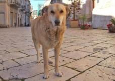Ricordando Italo, il cane mascotte di Scicli morto il 31 Gennaio 2011