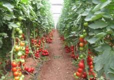 Non c'è tregua per gli agricoltori iblei. A peggiorare ulteriormente la grave situazione economica ora è il Consorzio di Bonifica di Ragusa