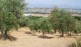 terreno e alberi
