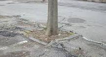 """Problemi con gli alberi a Marina di Ragusa, Laporta: """"Necessita l'intervento del Comune"""""""