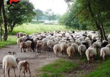 Vittoria – Pascolo abusivo: Denunciati 5 pastori