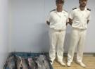 Pesca. I militari della Capitaneria di Porto di Pozzallo intensificano i controlli