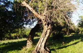 alberi avvelenati