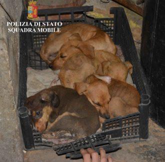 cani salvati 1
