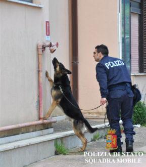 cane polizia stupefacenti ragusa
