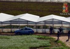 Vittoria – La Polizia ha scoperto una piantagione di marijuana. Arrestato un pregiudicato