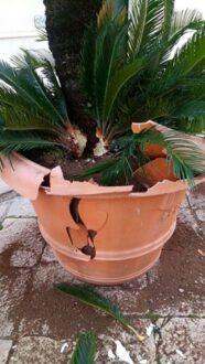 vaso rotto 1