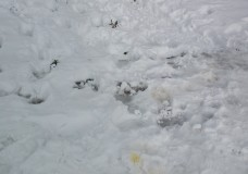 Candido come la Neve
