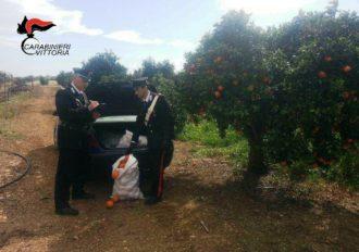 Vittoria (RG) Carabinieri furto arance