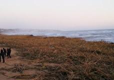 alluvione canne spiagge