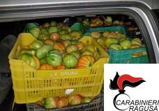 Santa Croce Camerina – Ladri di pomodori arrestati dai Carabinieri