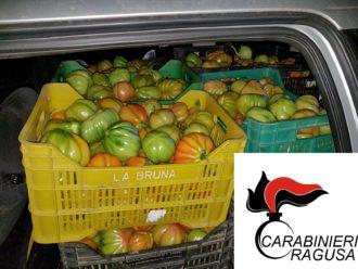 pomodori rubati