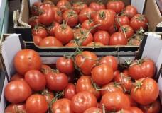 Frode commerciale scoperta dalla GDF. Pomodoro albanese venduto come prodotto siciliano
