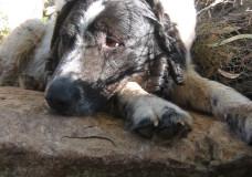 Cane ritrovato, grazie novetv
