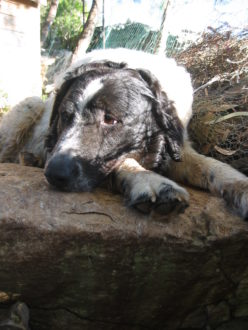 cane-ritrovato