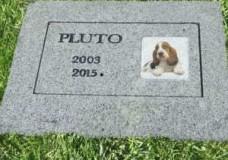 Ragusa – Cimiteri per animali d'affezione: manifestazione di interesse per il reperimento delle aree