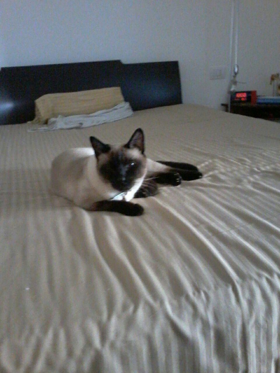 gatto-smarrito