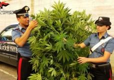 Chiaramonte Gulfi – Pensionato arrotondava coltivando marijuana: arrestato dai Carabinieri