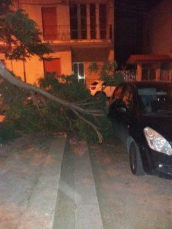 albero-caduto-1