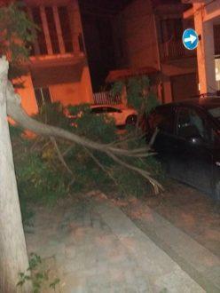 albero-caduto-2