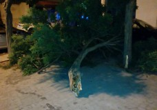 Scicli – Cade albero, danneggia auto