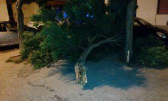 albero-caduto-3