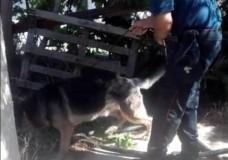 Scicli – Blitz antidroga dei Carabinieri. Arrestato 21enne, in casa sua scovato oltre 1 chilo di stupefacente