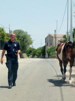 cavallo-modica