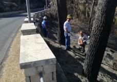 Chiaramonte Gulfi – Avviata la bonifica della pineta distrutta dagli incendi