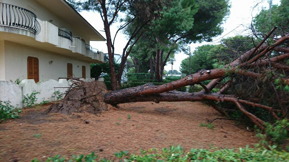 alberi-abbattuti-dal-vento-palya-1