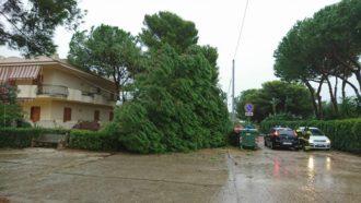 alberi-abbattuti-dal-vento-palya-2