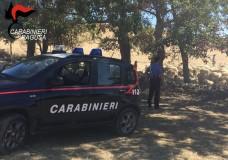 Carabinieri recuperano gregge rubato ad azienda di Giarratana